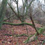 Urwald in NRW